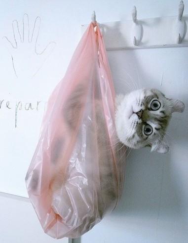 gatto-nel-sacco
